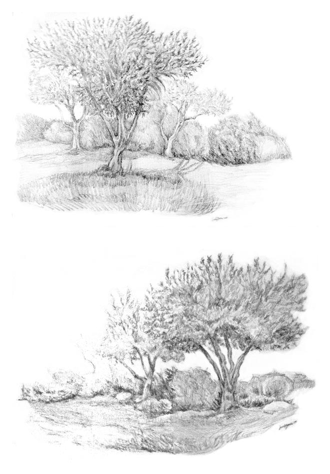 olivetreeswebnew